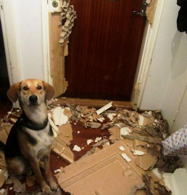 naughty-animals-destroying-stuff-5__605