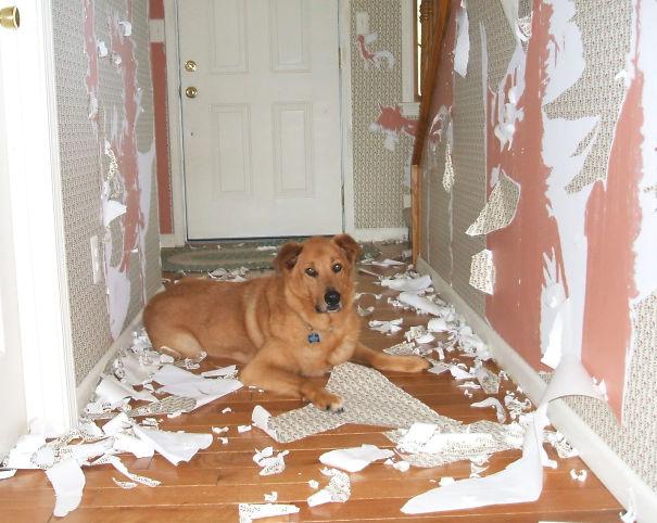 naughty-animals-destroying-stuff-6__605