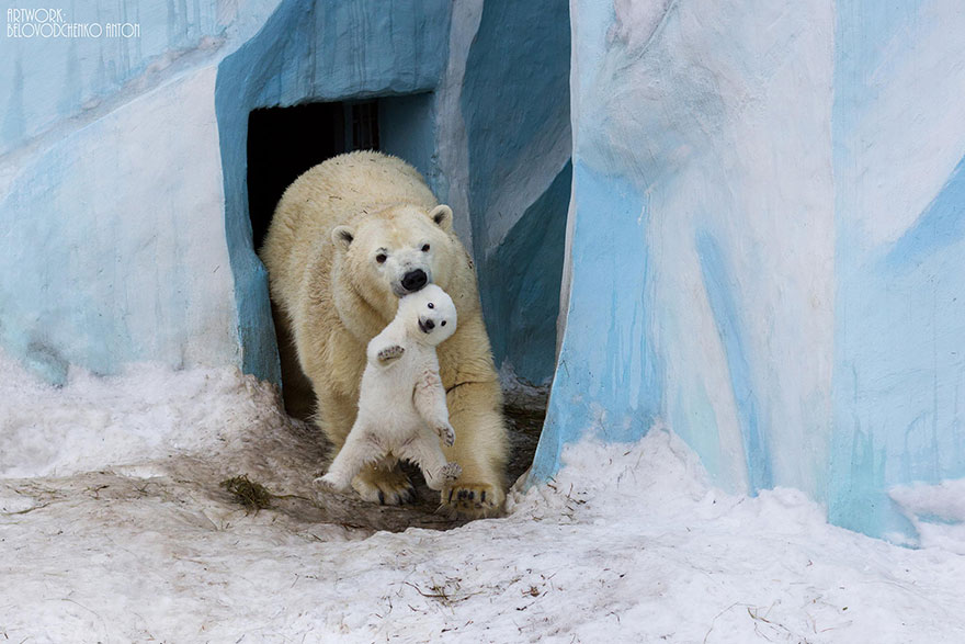polarbearparents1