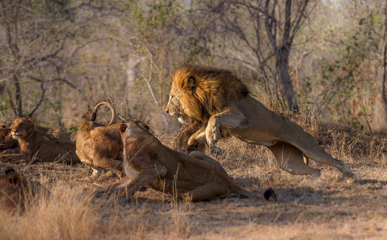 2015-Africa-Geographic-Photographer-of-the-Year-Award-06