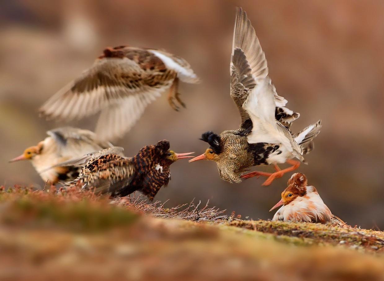 Pobediteli-fotokonkursa-Wild-life-Photographer-of-the-Year-2015_2