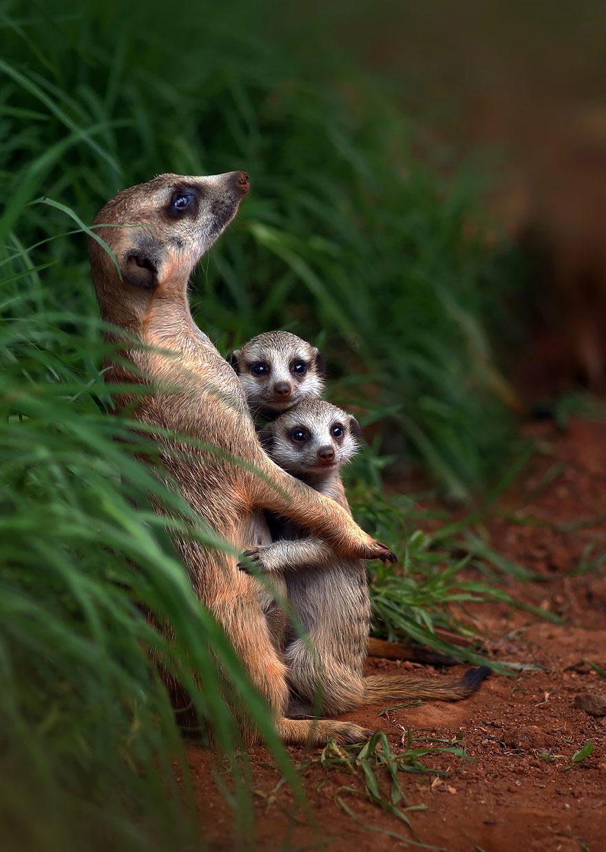 animal-family-portraits-19__880