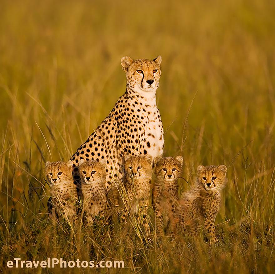 animal-family-portraits-26__880