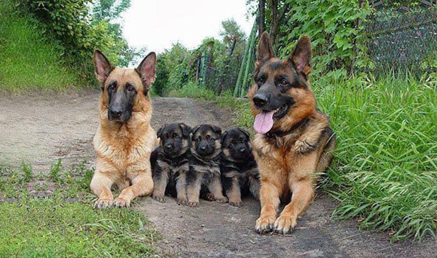 animal-family-portraits-36__700