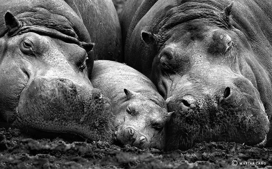 animal-family-portraits-51__700