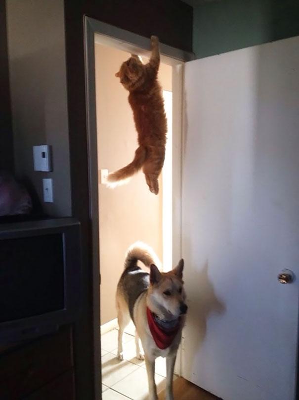 funny-cat-fails-27__605