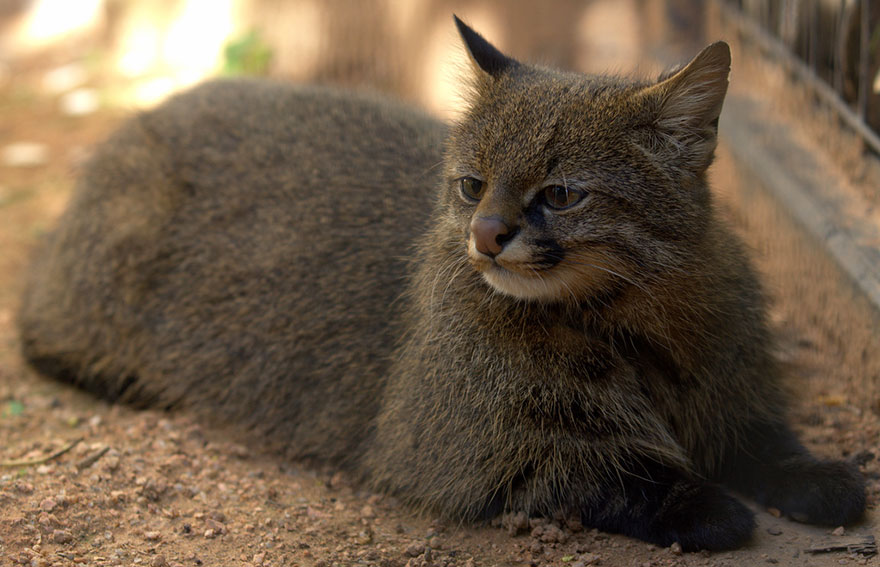 unusual-wild-cats-29__880