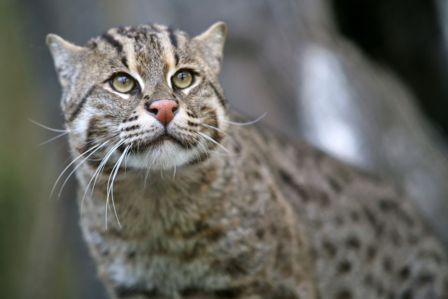 unusual-wild-cats-4__880