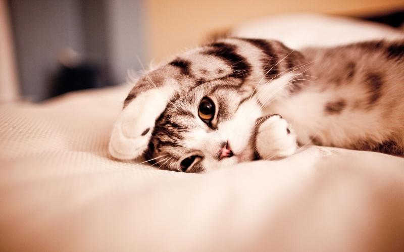 5082410-800-1449746975-Cute-Cat-Tumblr-C031