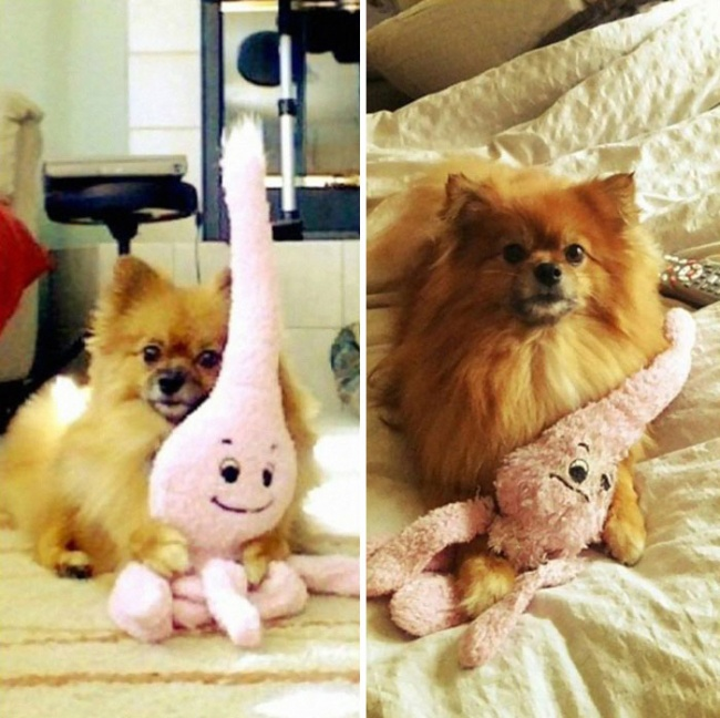 5277660-650-1450338081-pets-growing-up-with-toys-24__700