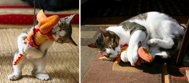 5278560-650-1450338081-before-and-after-growing-up-cats-27__700