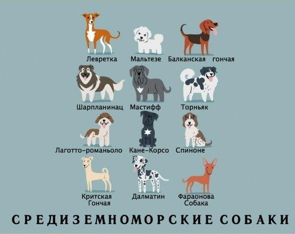 Dog_12