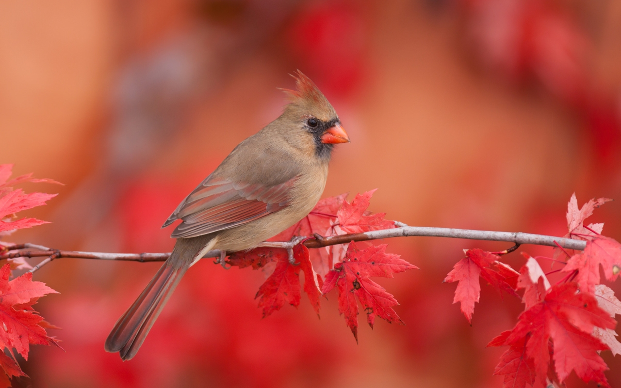 Feathered-wildlife-in-photos-Matthew-Studebaker-13