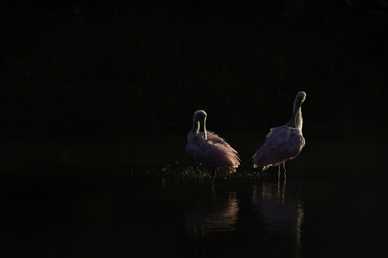 Feathered-wildlife-in-photos-Matthew-Studebaker-24