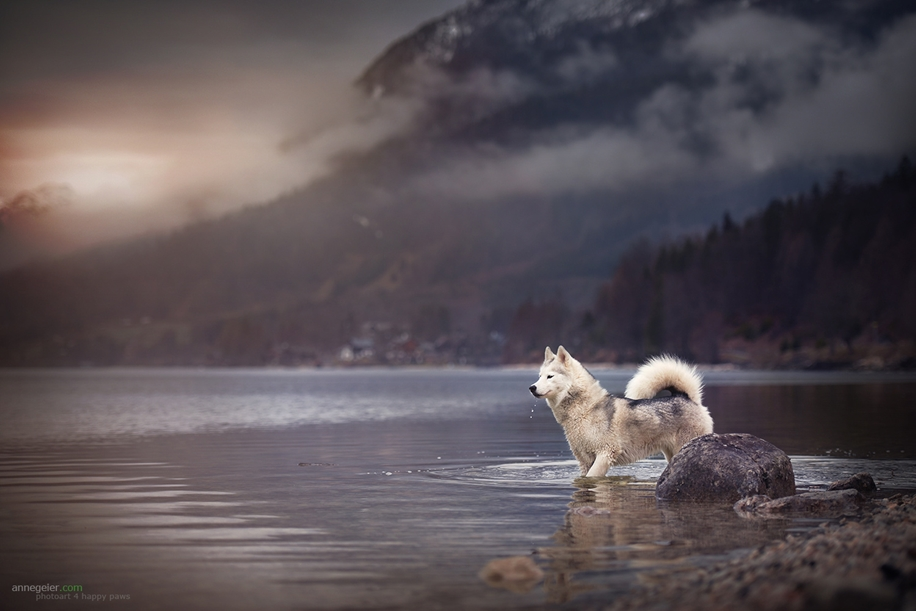 Woman-Creates-Enchanting-Portraits-of-Dogs-in-the-Austrian-Wilderness__1