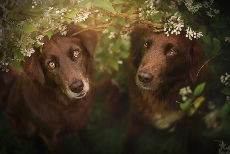 Woman-Creates-Enchanting-Portraits-of-Dogs-in-the-Austrian-Wilderness__21