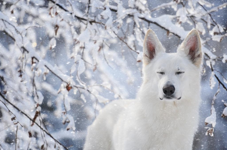 Woman-Creates-Enchanting-Portraits-of-Dogs-in-the-Austrian-Wilderness__23