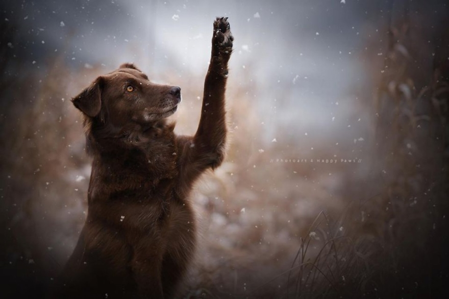 Woman-Creates-Enchanting-Portraits-of-Dogs-in-the-Austrian-Wilderness__25