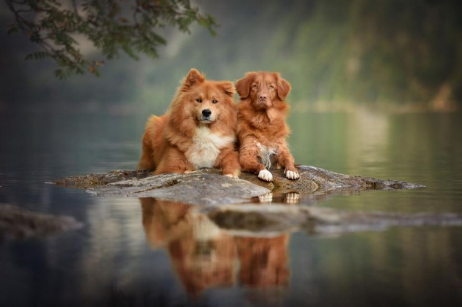 Woman-Creates-Enchanting-Portraits-of-Dogs-in-the-Austrian-Wilderness__26