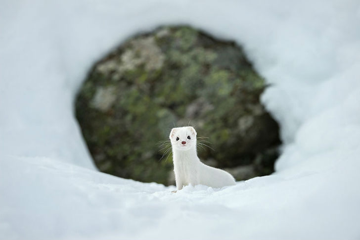 national-geographic-photo-of-the-day-internet-favorites-2015-36__880
