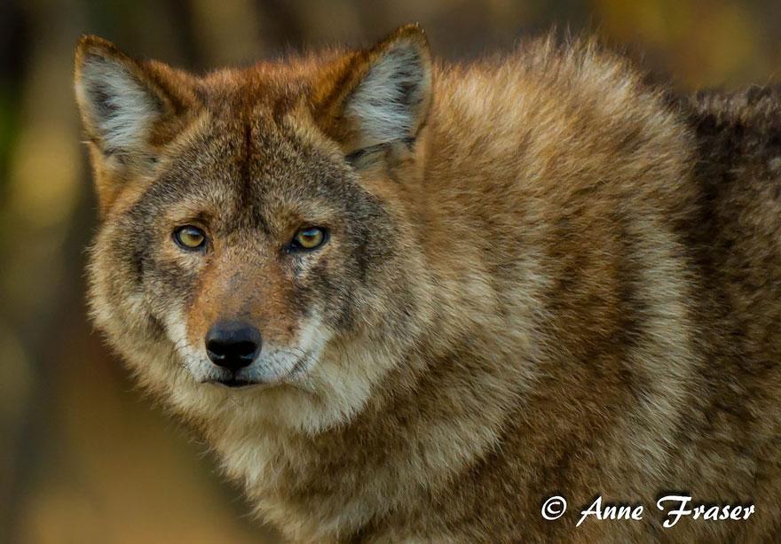 unusual-hybrid-animals-51