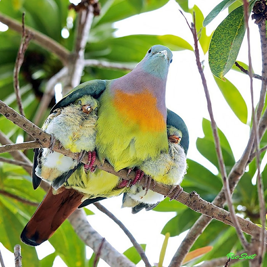 Pictures-of-birds-who-care-about-their-kids-03