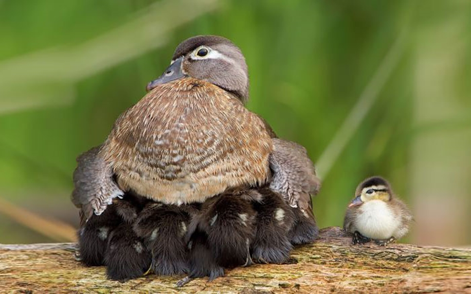 Pictures-of-birds-who-care-about-their-kids-13