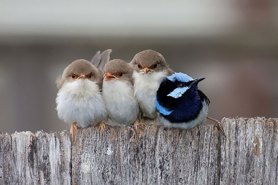 Pictures-of-birds-who-care-about-their-kids-16
