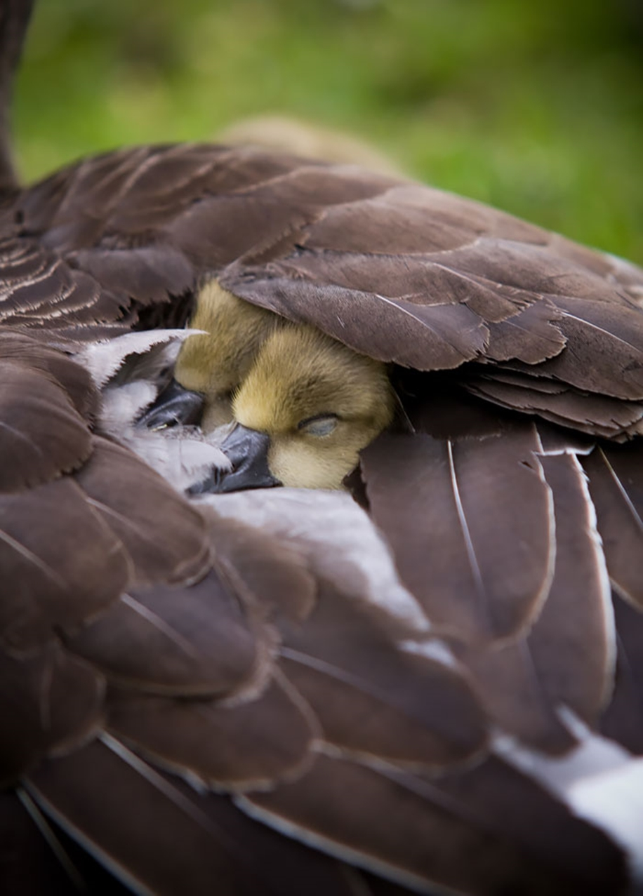 Pictures-of-birds-who-care-about-their-kids-18