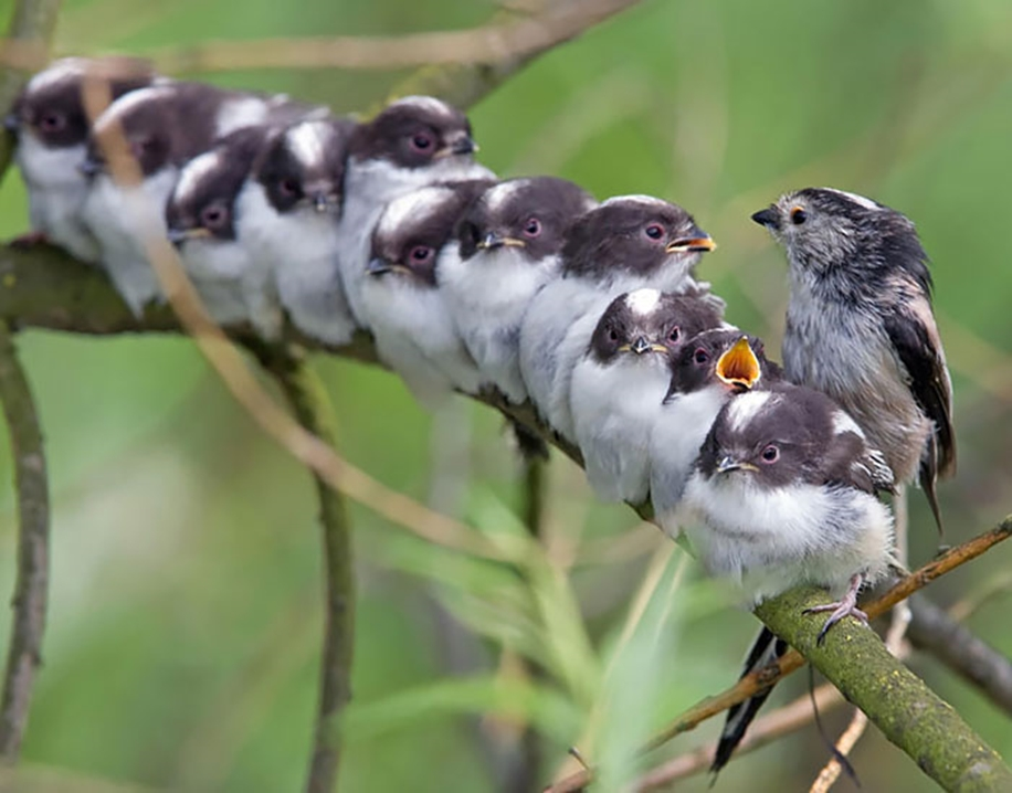 Pictures-of-birds-who-care-about-their-kids-24