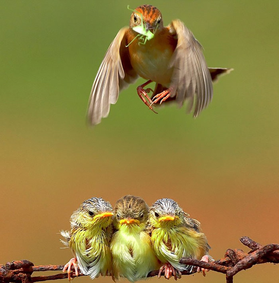 Pictures-of-birds-who-care-about-their-kids-25