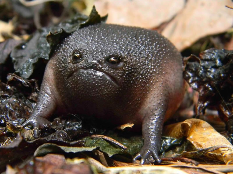 Weird-Nature-Photos-The-Strangest-Frogs-On-The-Planet-3