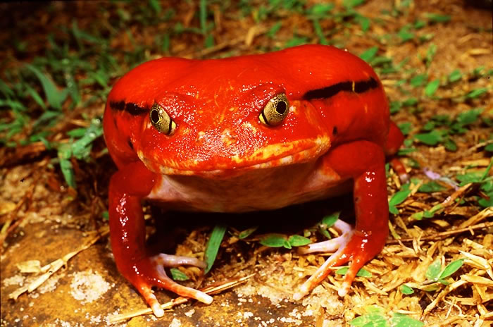 Weird-Nature-Photos-The-Strangest-Frogs-On-The-Planet-7