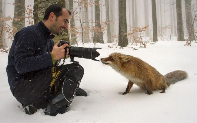 273305-650-1451511829-fox-camera_2488032k