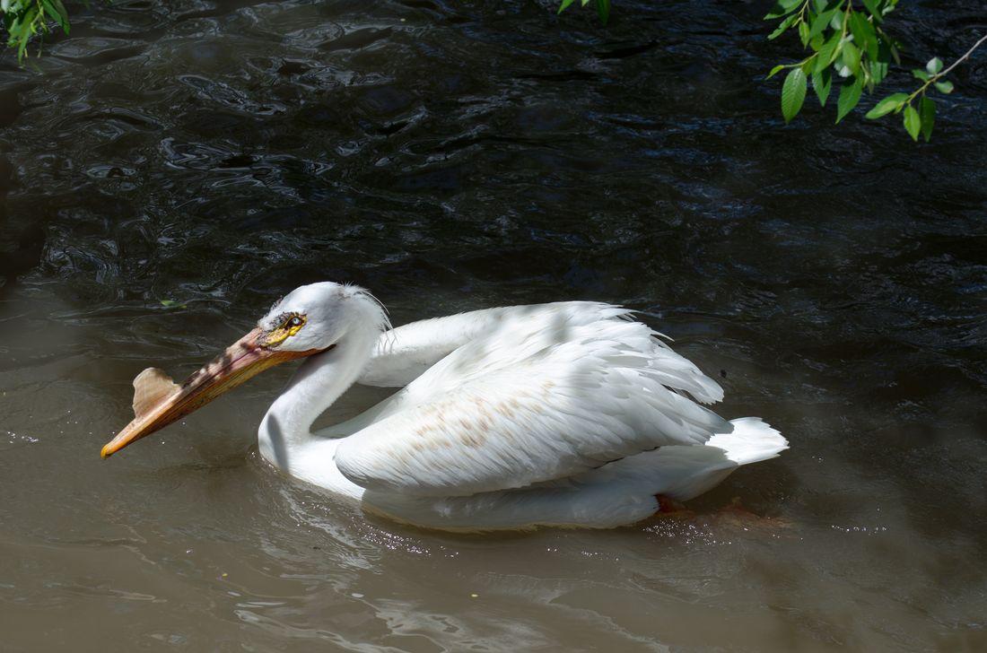 Bird-zoo-in-salt-lake-city-02