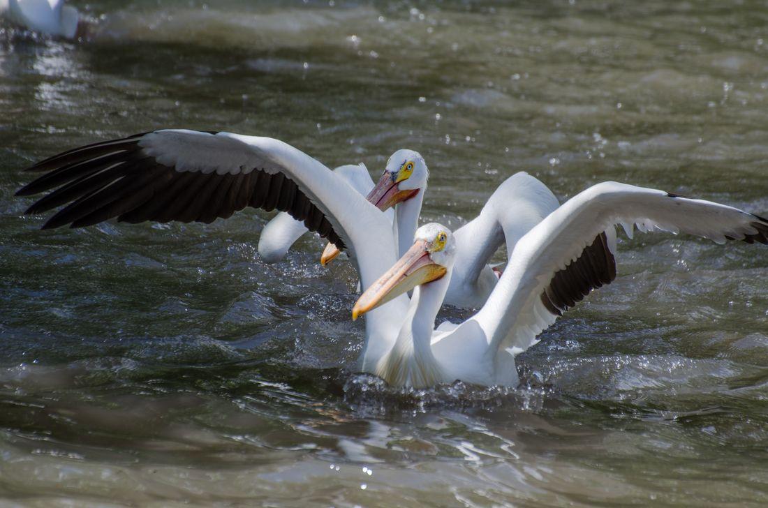 Bird-zoo-in-salt-lake-city-03