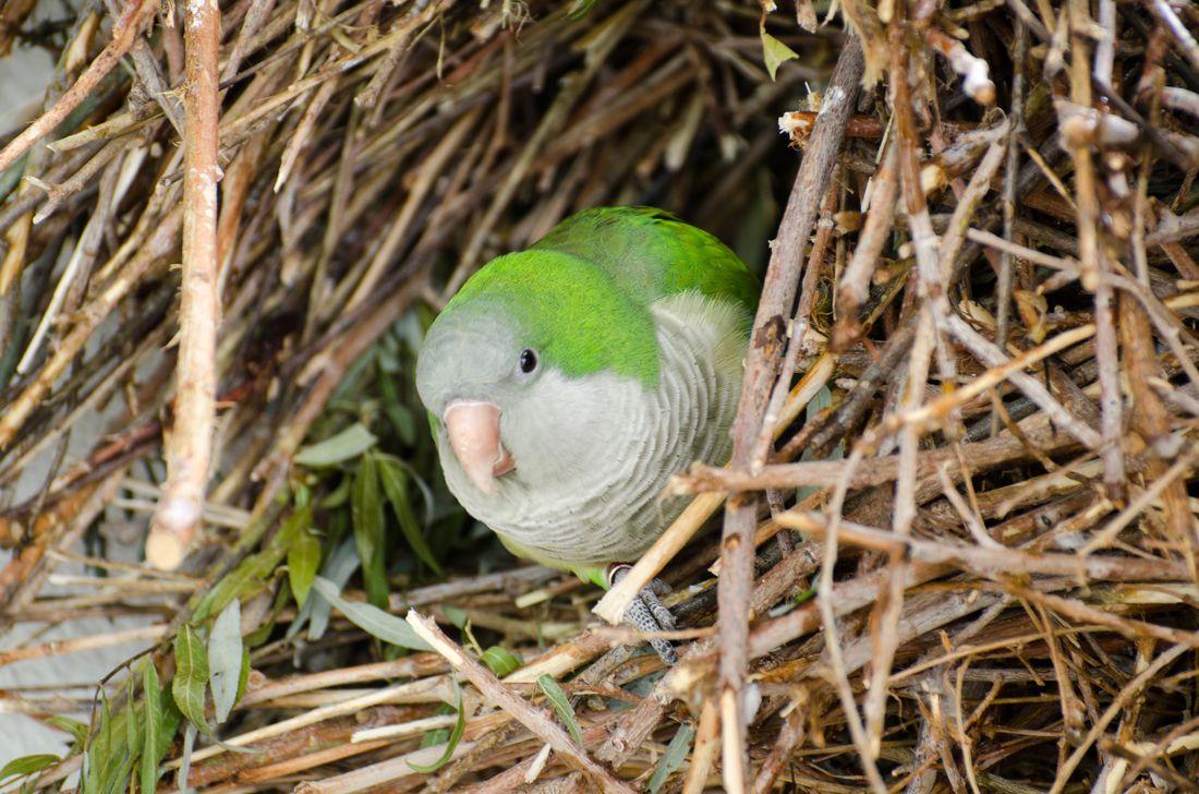 Bird-zoo-in-salt-lake-city-11