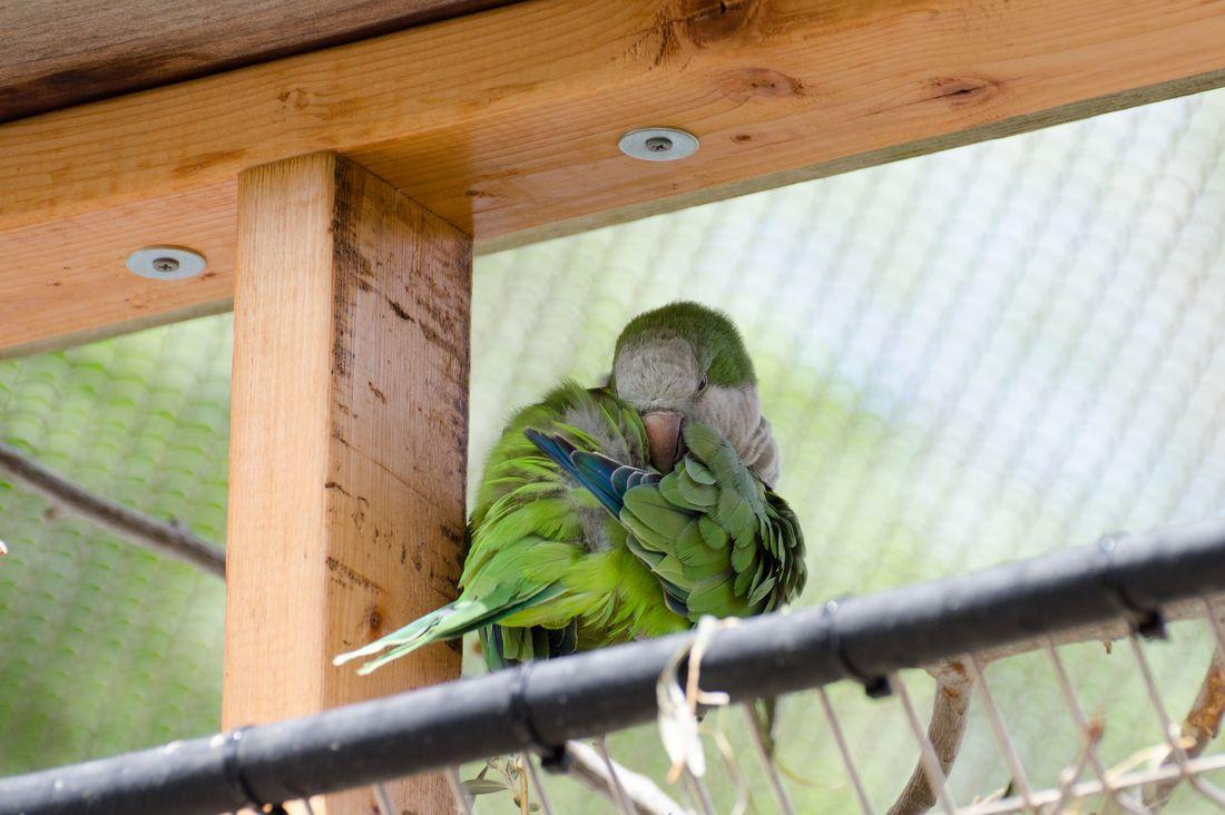 Bird-zoo-in-salt-lake-city-13