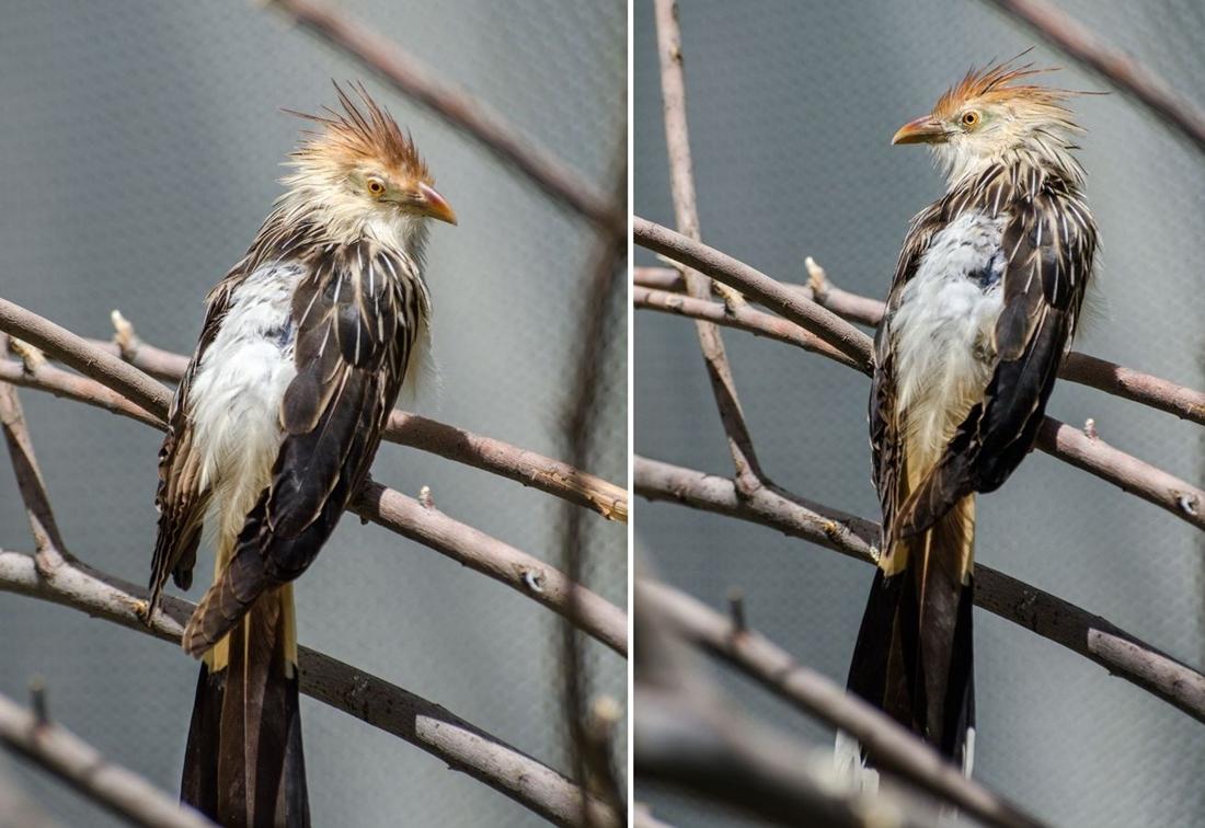 Bird-zoo-in-salt-lake-city-14