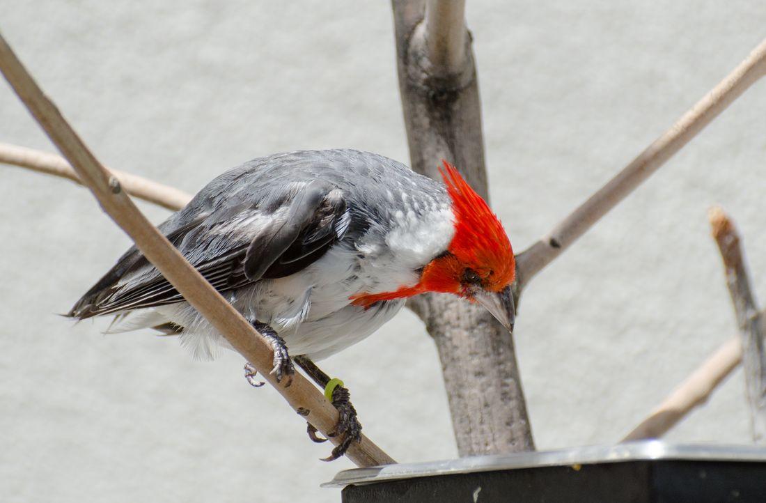 Bird-zoo-in-salt-lake-city-15