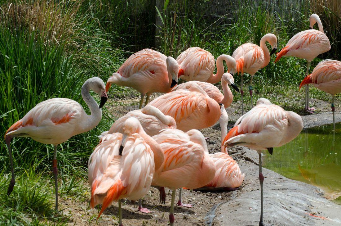 Bird-zoo-in-salt-lake-city-17