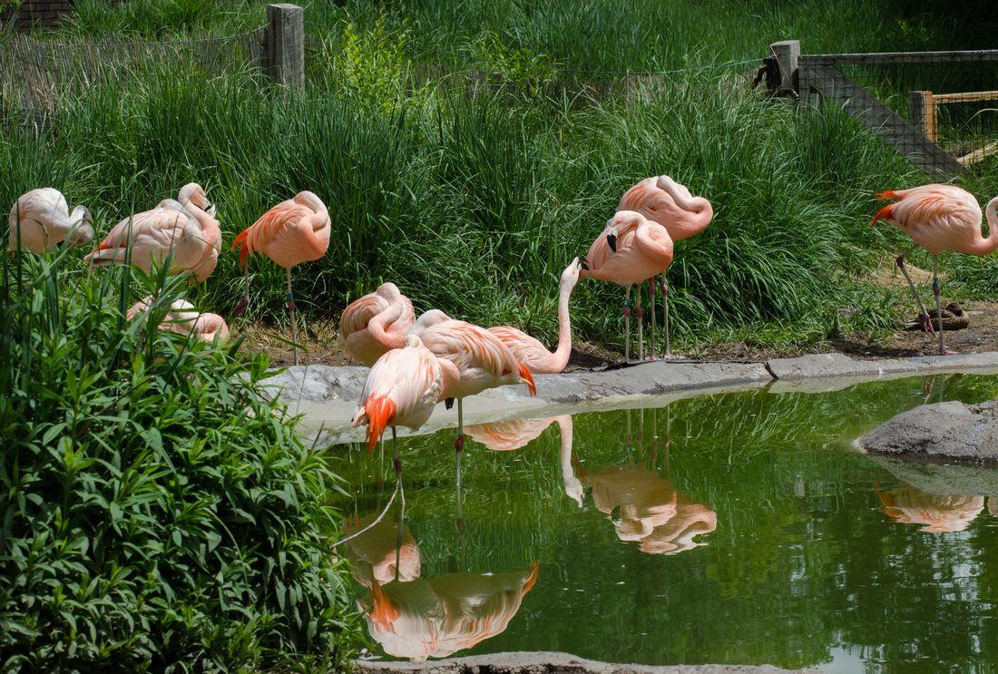 Bird-zoo-in-salt-lake-city-18