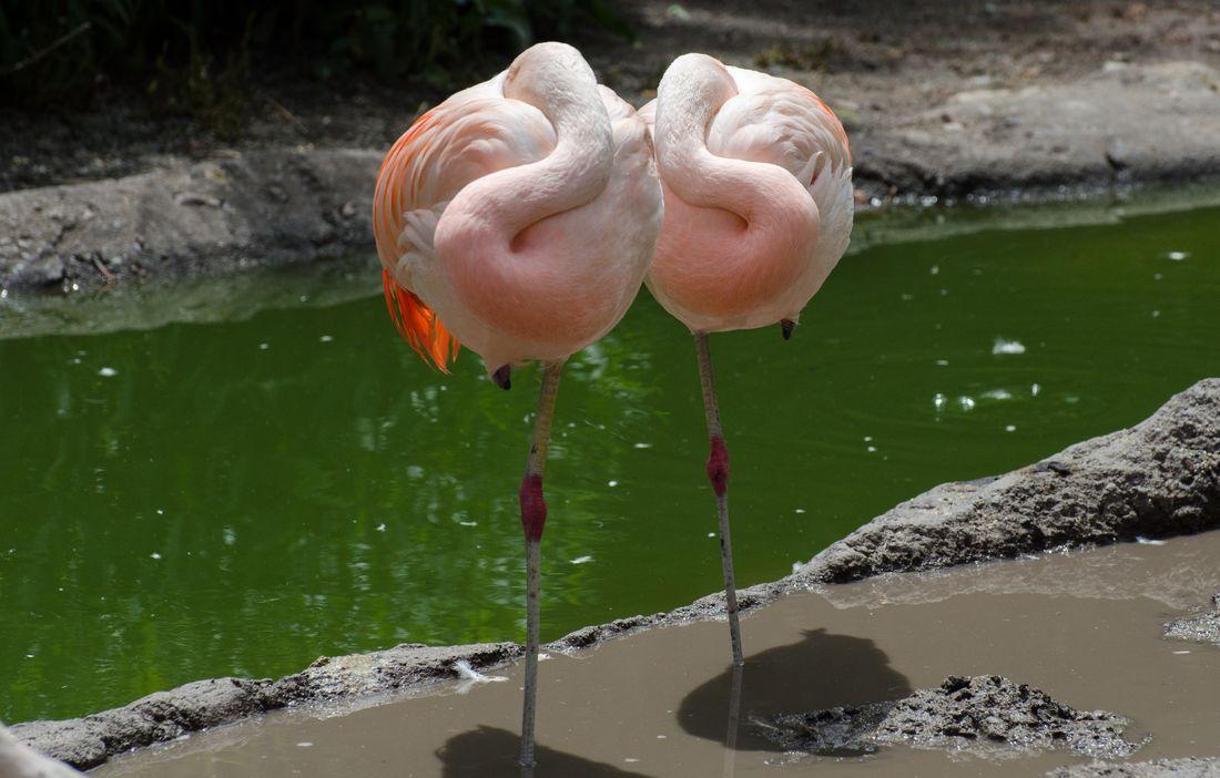 Bird-zoo-in-salt-lake-city-19