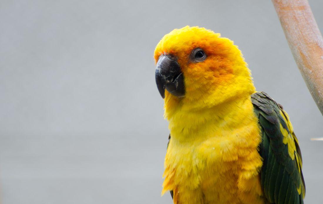 Bird-zoo-in-salt-lake-city-21