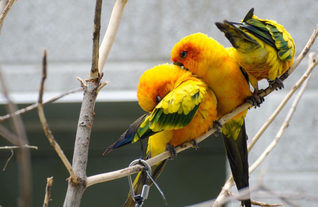 Bird-zoo-in-salt-lake-city-22