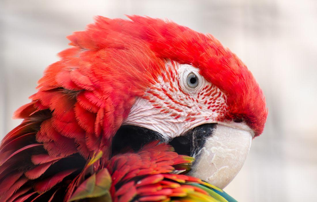 Bird-zoo-in-salt-lake-city-29