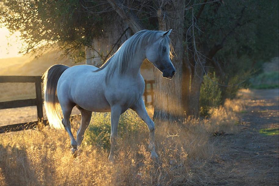 The-beauty-and-grace-of-horses-in-the-photos-by-Wojtek-Kwiatkowski-01