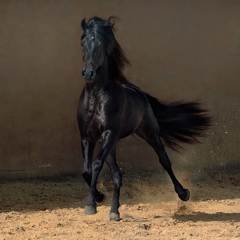 The-beauty-and-grace-of-horses-in-the-photos-by-Wojtek-Kwiatkowski-03