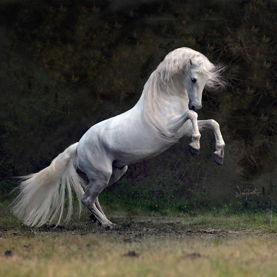 The-beauty-and-grace-of-horses-in-the-photos-by-Wojtek-Kwiatkowski-04