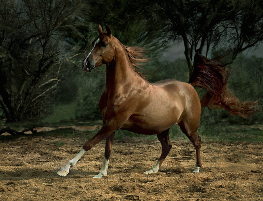 The-beauty-and-grace-of-horses-in-the-photos-by-Wojtek-Kwiatkowski-07